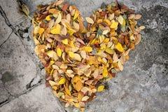 Coração feito das folhas Imagem de Stock