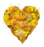 Coração feito das folhas de outono Foto de Stock