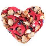 Coração feito de escudos do mar Imagem de Stock