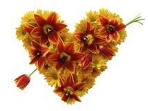 Coração feliz da flor com seta do tulip fotografia de stock royalty free