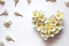 Coração floral dos verões com flores fotografia de stock royalty free