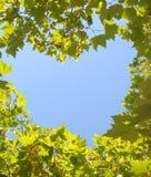 Coração frondoso Fotografia de Stock Royalty Free