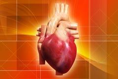 Coração humano foto de stock