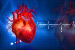 Coração humano ilustração royalty free