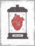 Coração humano em uma ilustração médica do vetor do frasco Imagens de Stock Royalty Free