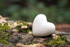 Coração na natureza Foto de Stock