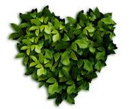 Coração nas folhas imagens de stock