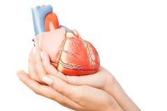Coração nas mãos Fotografia de Stock Royalty Free