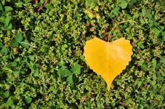 Coração natural Fotografia de Stock Royalty Free