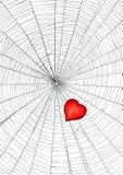 Coração no Web de aranha Foto de Stock Royalty Free