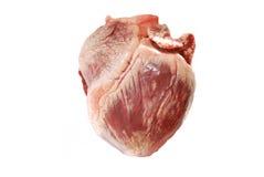 Coração real da carne de porco foto de stock