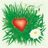 Coração só na grama Imagens de Stock