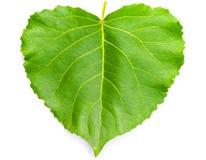 Coração verde folha dada forma Imagem de Stock Royalty Free