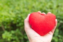 Coração vermelho à disposição nos fundos da grama verde com espaço da cópia Foto de Stock