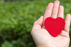 Coração vermelho à disposição nos fundos da grama verde com espaço da cópia Fotos de Stock