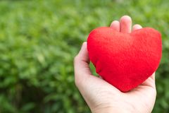 Coração vermelho à disposição nos fundos da grama verde com espaço da cópia Fotografia de Stock