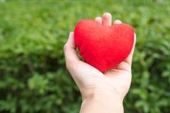 Coração vermelho à disposição nos fundos da grama verde com espaço da cópia Imagens de Stock