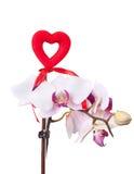 Coração vermelho com a orquídea cor-de-rosa macia Imagem de Stock