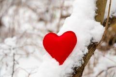 Coração vermelho de matéria têxtil na árvore nevado Fotos de Stock