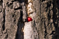 Coração vermelho em uma árvore seca imagens de stock royalty free