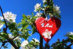 Coração vermelho na árvore de maçã de florescência imagens de stock royalty free