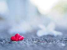 Coração vermelho na estrada Imagem de Stock