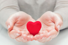 Coração vermelho pequeno nas mãos do ` s da mulher em um gesto da doação, protegendo Imagens de Stock