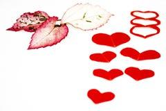 Corações com folhas em um fundo branco liso Imagem de Stock