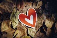 Corações de papel vermelhos na terra Fotos de Stock Royalty Free