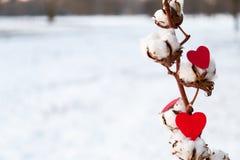 Corações e gossypium vermelhos Fotos de Stock