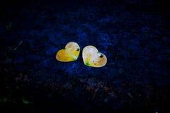 Corações junto Foto de Stock