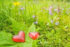 Corações para a natureza Fotografia de Stock