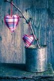 Corações que penduram a caixa da lata do galho Fotos de Stock Royalty Free