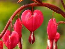 Corações quebrados Fotografia de Stock Royalty Free
