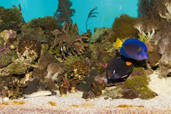 Cora Reefl Fish Landscape in Aquarium Stock Photos
