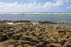 Corail à la plage de Porto de Galinhas Photo libre de droits