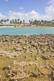 Corail à la plage de Porto de Galinhas Photographie stock
