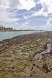 Corail à la plage de Porto de Galinhas Image libre de droits