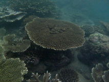 corail photos stock