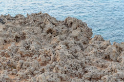 corail photo stock