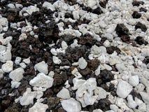 Corail blanc sur le macro en gros plan de plage de roche de lave sur la côte de Maui près de Kihei dans la réservation naturelle  images libres de droits