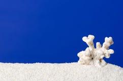 Corail blanc sur le sable blanc avec le fond d'outre-mer photo libre de droits