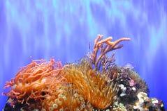 Corail coloré de poissons Image libre de droits
