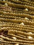 Corail de champignon de couche - espèces de Fungia. image libre de droits