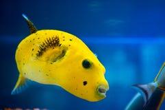 corail de colonie Images stock