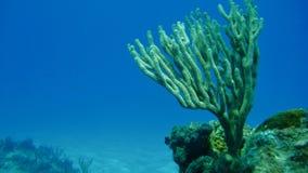 Corail de embranchement dans l'océan image stock