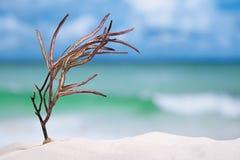 Corail de mer sur la plage blanche de sable Photographie stock