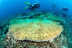 Corail de table de Staghorn dans Sipadan, Malaisie Image stock