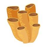 Corail de tube de Brown, icône tropicale de Marine Invertebrate Animal Isolated Vector de récif illustration stock