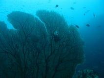 Corail en mer d'Andaman. Photos stock